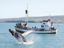 Whale watching from Húsavík - Day tour by Air and Bus from Reykjavík to North Iceland