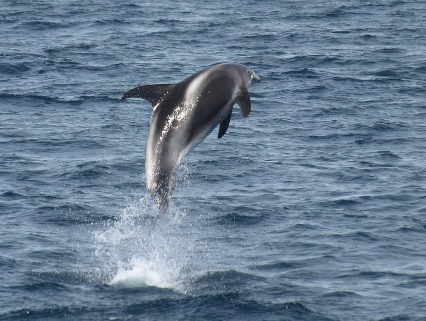 White beaked dolphin habitat